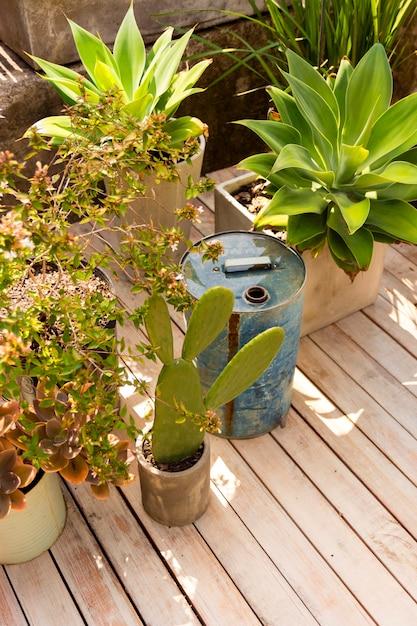 Высокий угол различных растений в теплице Бесплатные Фотографии