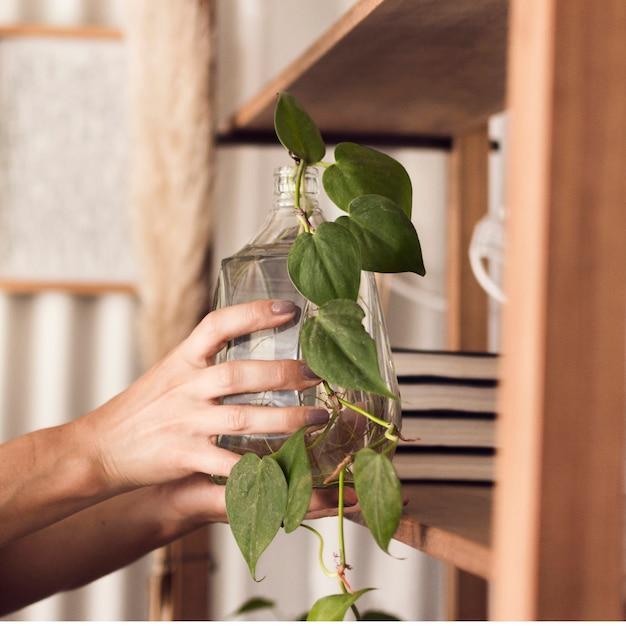 Женщина ухаживает за растением в банке Бесплатные Фотографии