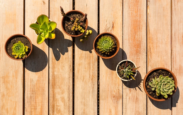 鉢の植物の美しい配置 無料写真