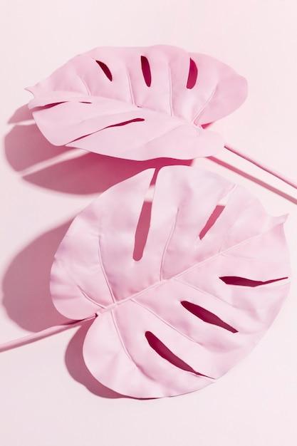 トップビューピンクのヤシの葉 無料写真