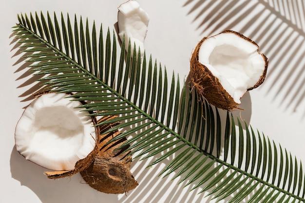 植物とココナッツのトップビュー 無料写真