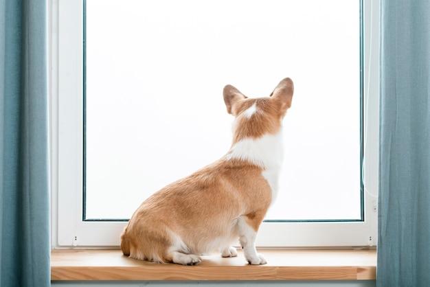 Вид сзади собака смотрит в окно Бесплатные Фотографии