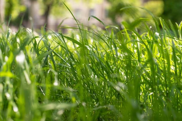 夏の日光の下で新鮮な草 無料写真