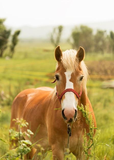 Вид спереди красивая коричневая лошадь Бесплатные Фотографии