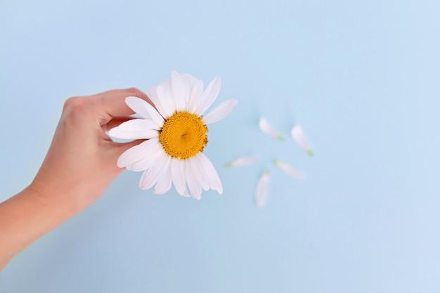 柔らかい女性の手はカモミールのフィールドブランチを保持します Premium写真