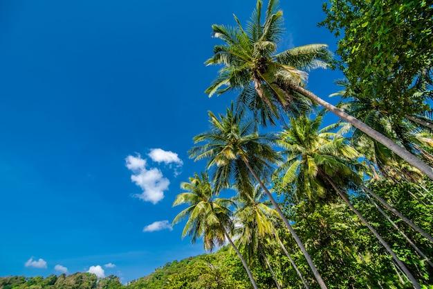 Кокосовые пальмы и голубое небо, летнее призвание Бесплатные Фотографии