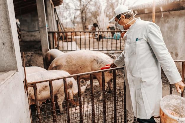 豚の顔に白いコートとマスクの獣医。豚の飼育コンセプト。 Premium写真