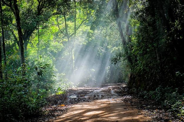 雨の道のある雨の森 Premium写真