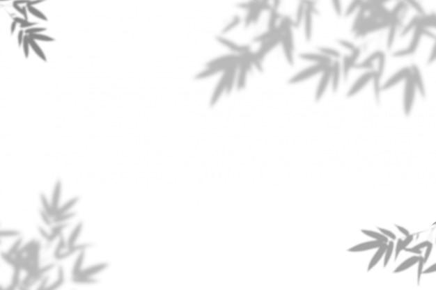 竹は白い壁の背景に影を残します。 Premium写真