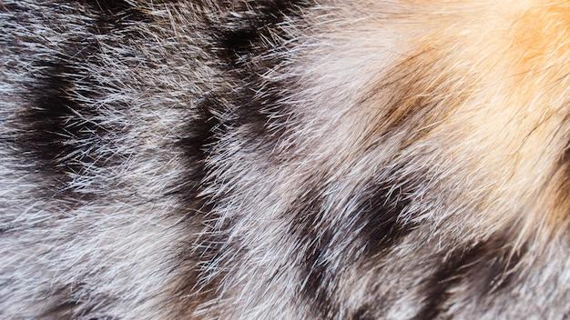 カラフルな猫の毛皮 Premium写真
