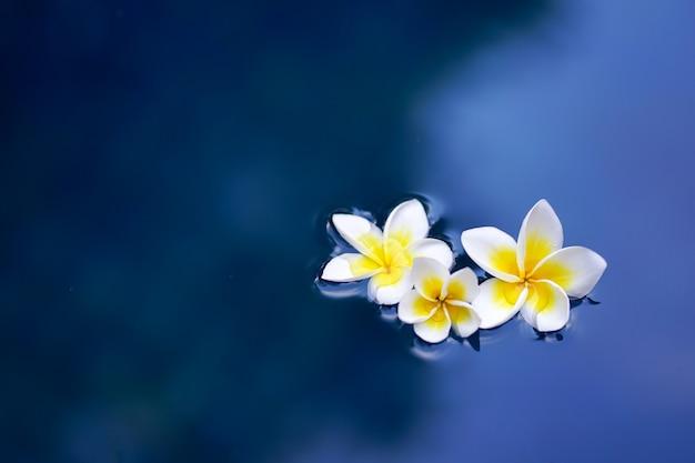 水面にフランジパニの花 Premium写真