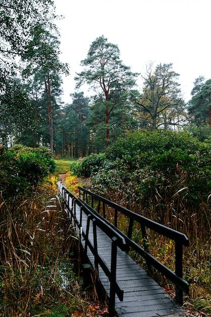 Узкий деревянный мост, ведущий к вечнозеленому хвойному лесу Premium Фотографии
