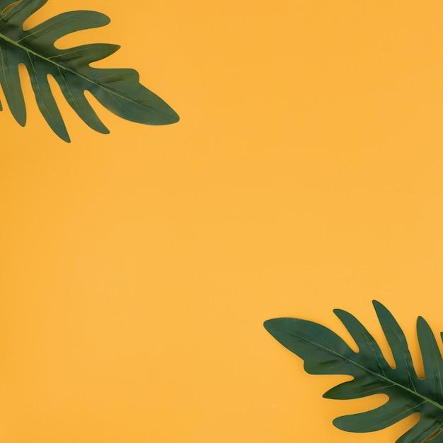 黄色の背景に熱帯のヤシを葉します。夏のコンセプトです。 無料写真