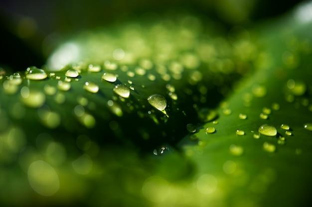 Капли росы на листьях не зеленые Premium Фотографии