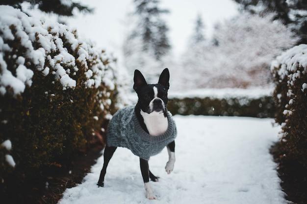 植物の近くのショートコートの黒と白の犬 無料写真