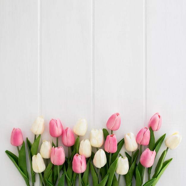 白とピンクの白い木製の背景に美しいチューリップ 無料写真
