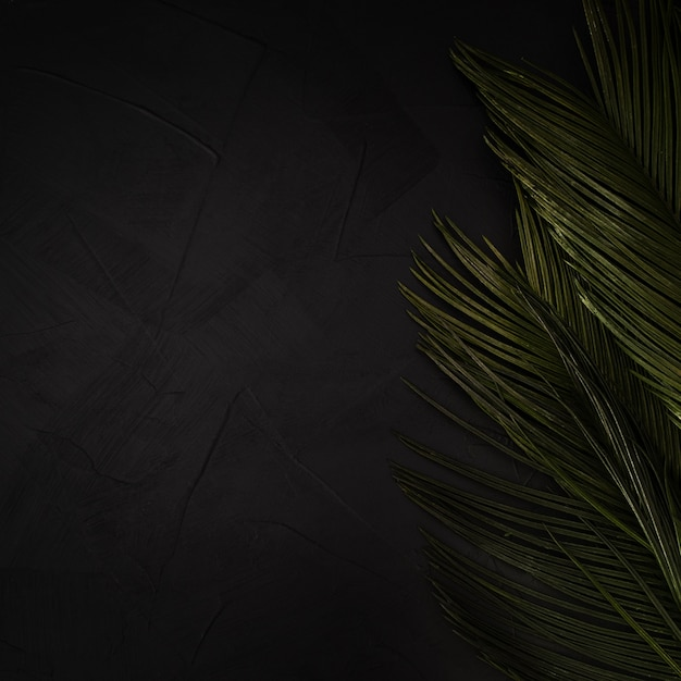 コピースペースと黒のテクスチャ背景に緑のヤシの葉。 無料写真