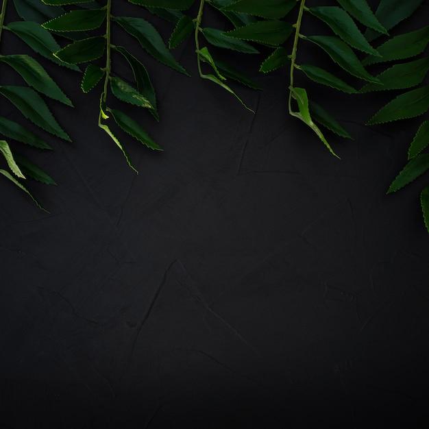 緑の葉の背景。緑の葉の色調が濃い 無料写真