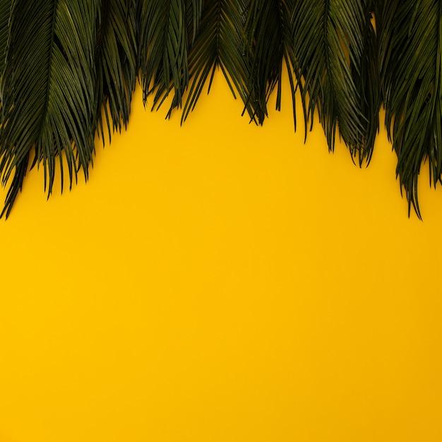 Тропические пальмовые листья на желтом Бесплатные Фотографии