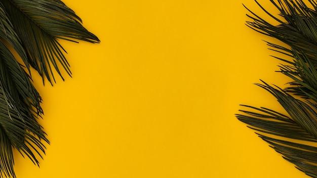 明るい黄色の背景に熱帯のヤシの葉 無料写真