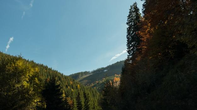 青い空と緑 Premium写真