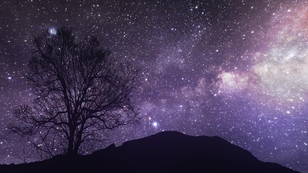 Промежуток времени звездной ночи с тенью дерева Premium Фотографии