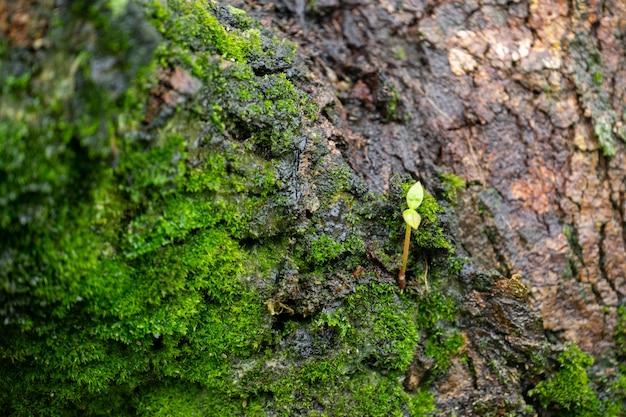 Крошечное дерево находится на коре, в окружении моховых деревьев. Premium Фотографии