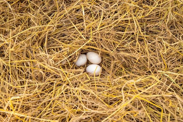 アヒルの卵はわらの上にあります。 Premium写真
