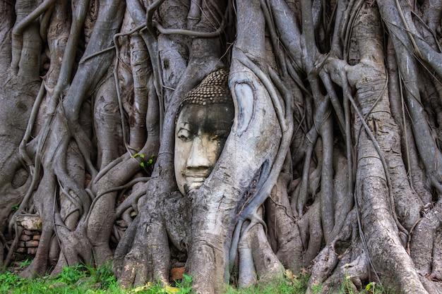 タイのアユタヤのワットマハタートで菩提樹の根の仏像の頭。 Premium写真