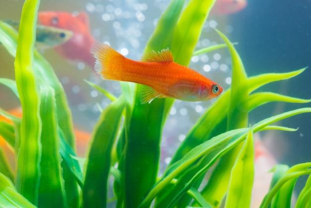 水槽や水槽の小さな魚 Premium写真