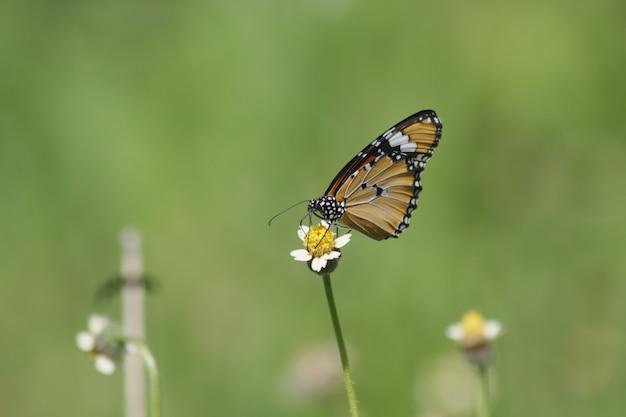 Красивые бабочки на листьях Premium Фотографии