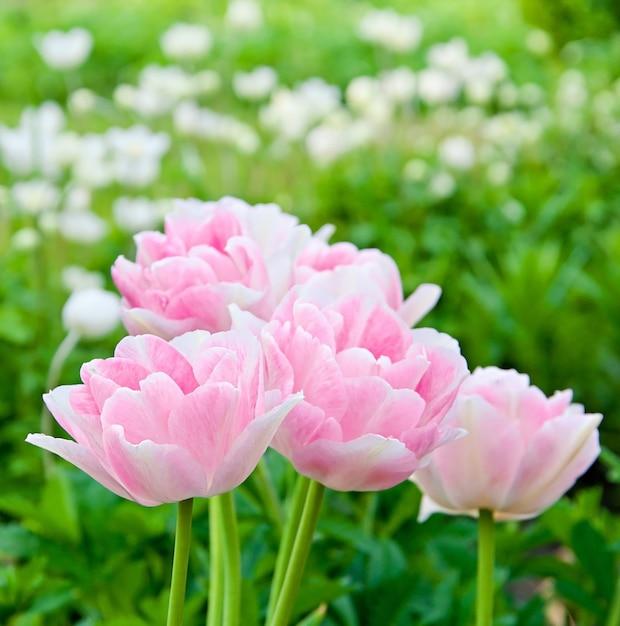 Красивые розовые цветы в поле Бесплатные Фотографии