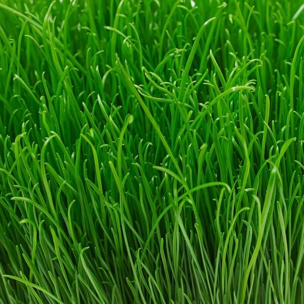 ジューシーな若い緑の草のテクスチャ 無料写真