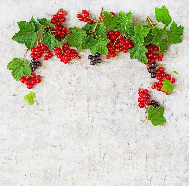 明るい背景に葉と赤と黒スグリ。フレーム。上面図 無料写真