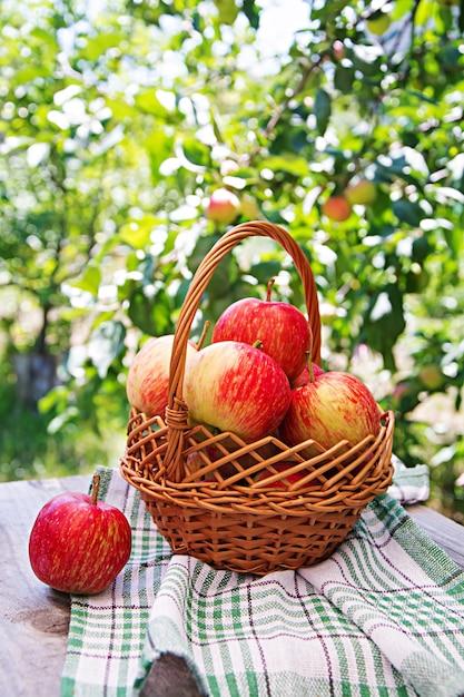 夏の庭のテーブルの上のバスケットに新鮮な赤いリンゴ 無料写真