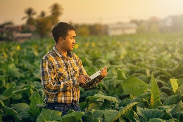Фермер, исследующий завод табачной фермы. сельское хозяйство и концепция ученого. Premium Фотографии