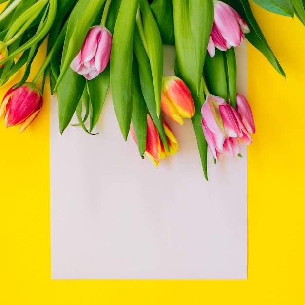 春の背景:黄色の背景に囲まれたベージュのカードにピンクのチューリップ。平置き。スペースをコピーします。 Premium写真