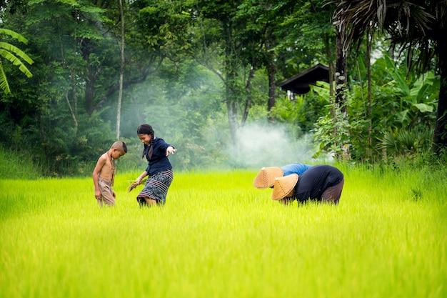 アジアの家族農家が田んぼで田植え、タイの雨季に田植え Premium写真