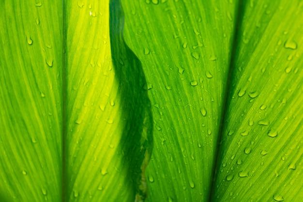 露と緑の葉の背景 Premium写真