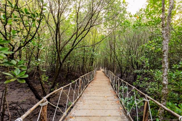 マングローブ林と朝の光 Premium写真