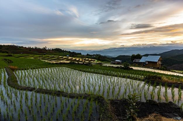 雨季、タイのチェインマイのパボンピアン棚田 Premium写真