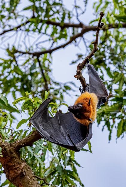 протяжении картинка летучая мышь на дереве существовал