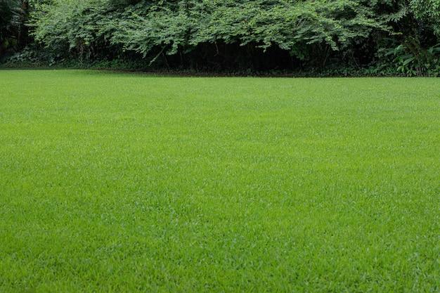 Красивый газон в природном ландшафте Premium Фотографии