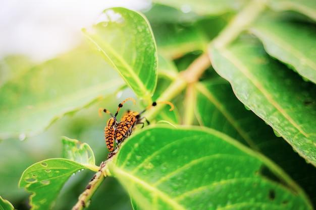 昆虫が繁殖する。 Premium写真