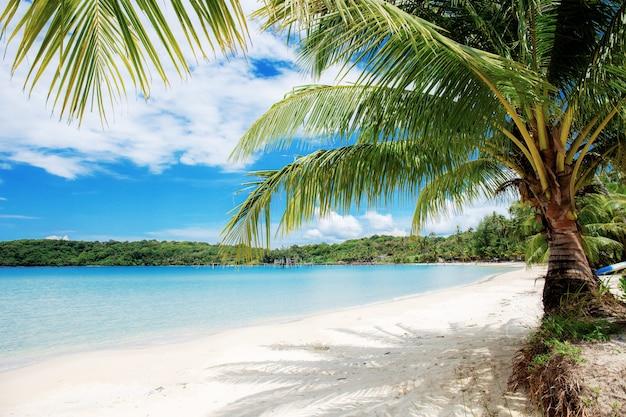 海でヤシの木。 Premium写真