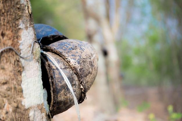 ゴムの木の古いボウル。 Premium写真