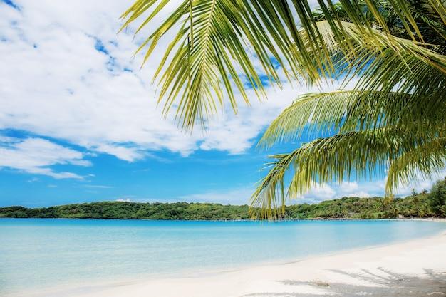 Пальмовые листья на пляже в море. Premium Фотографии