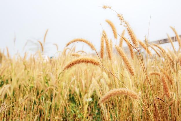 日光の草原。 Premium写真