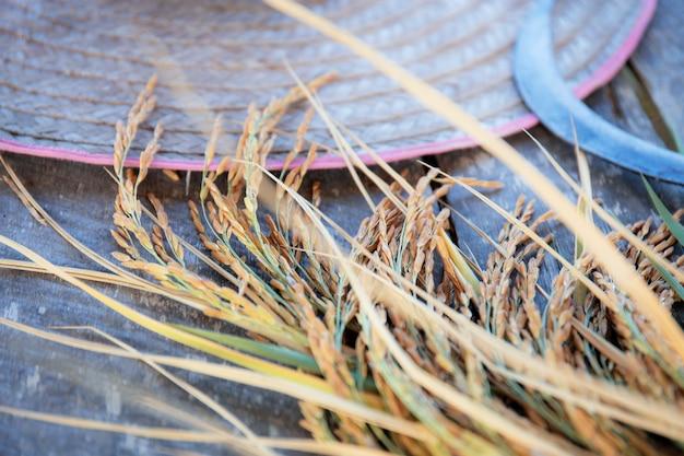 木の上の米の耳。 Premium写真