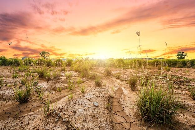 Земля с сухой почвой или потрескавшейся земной текстурой и травой на оранжевом фоне неба Premium Фотографии